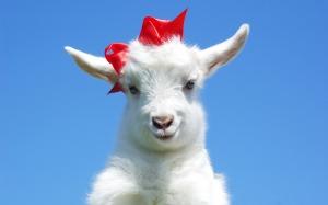 в чем встречать год козы
